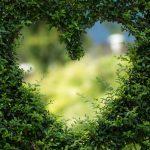 Plantenklimrek: online een economisch voordelige aankoop doen hiermee!